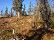 Solrik tomt i naturskjønne omgivelser