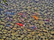 Selgers bilder: Om sommeren blir det satt ut fisker i dammen.