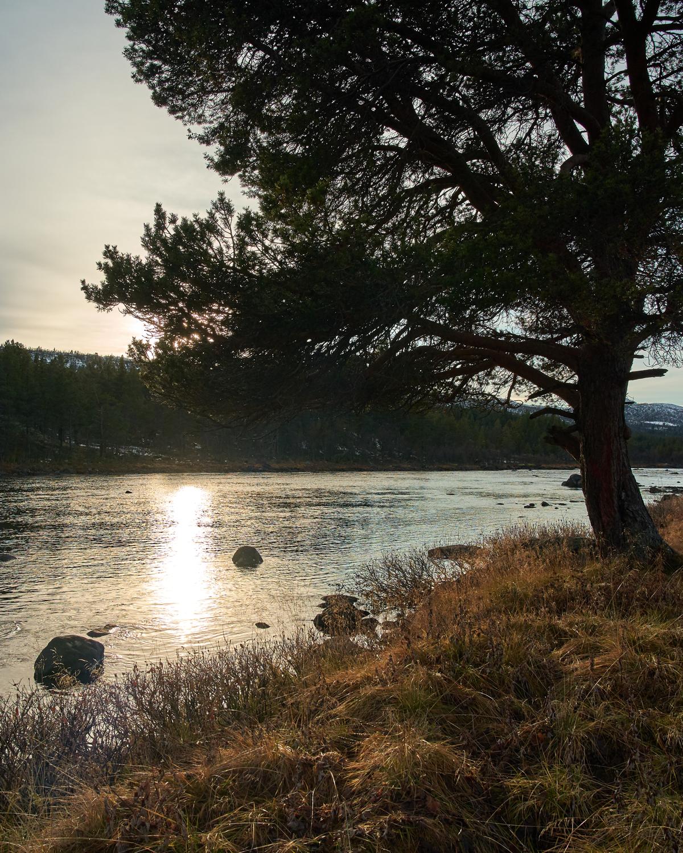 Lågen med mange flotte plasser. Foto: Trond Kjønås