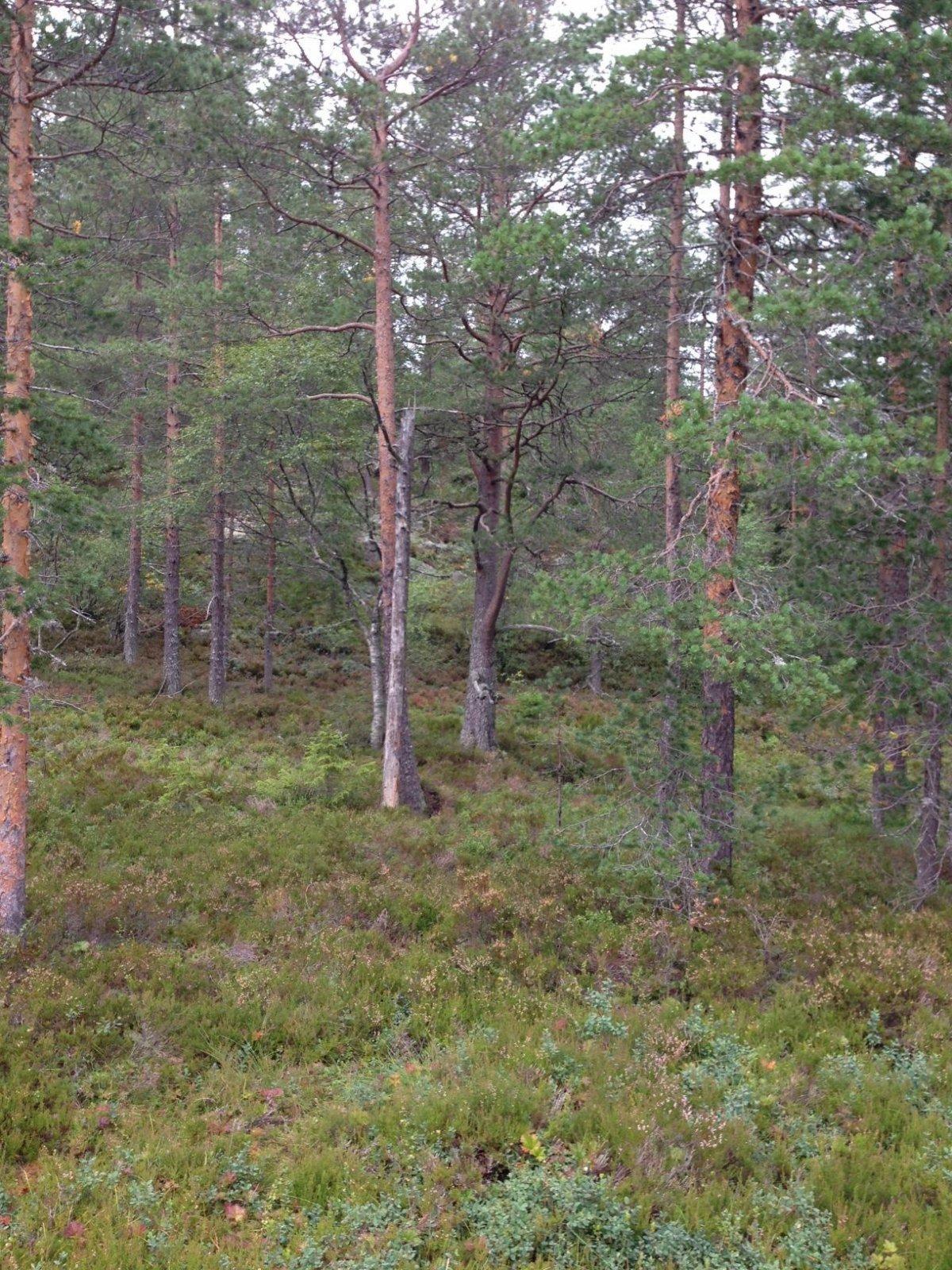Tomten ligger i snøsikkert skogsterreng